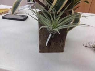 airplant2
