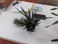 airplant5