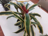 airplant6