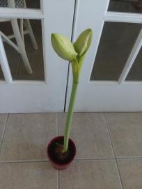 seeds3