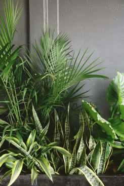 houseplant plastic