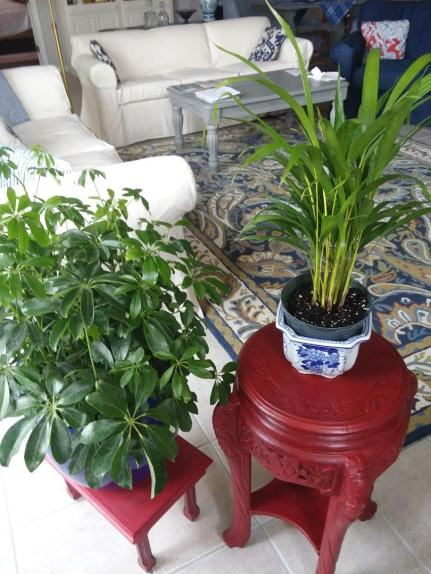 houseplants1