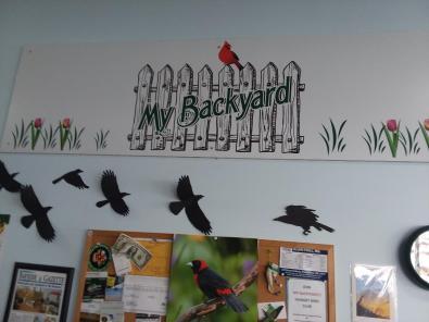 mybackyard1