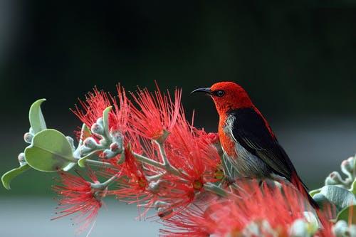 birds flowers1