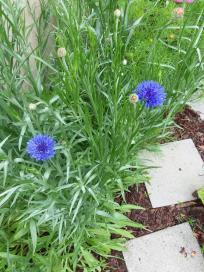 blue flower 10