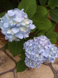 blue flower 5
