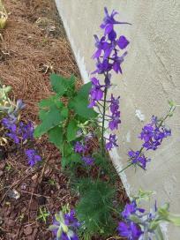 blue flower 9